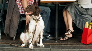pet friendly restuarants