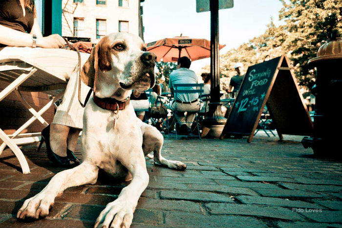 pet-friendly restaurants cape town