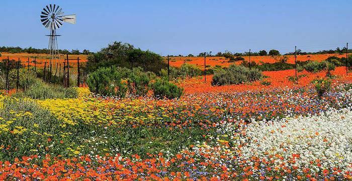 namaqua national park SANParks