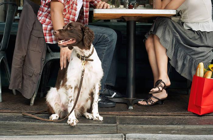 Die Damhuis dog menu