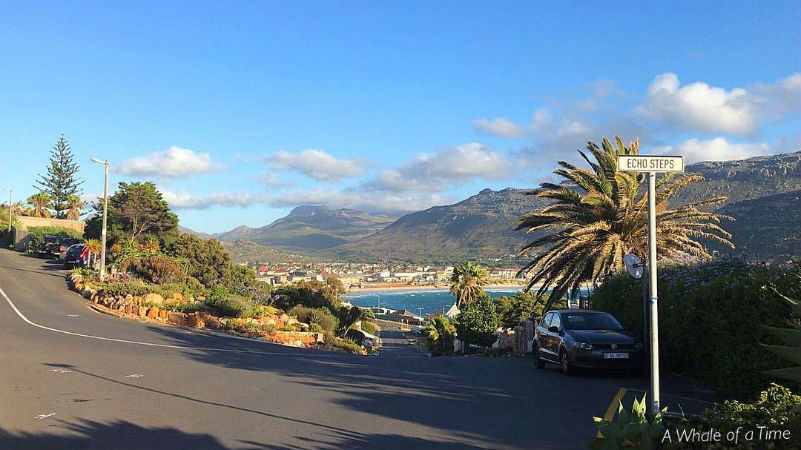 Fish Hoek Whale of a Time