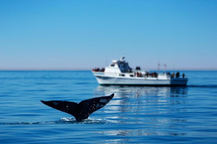 Whales Cape Town